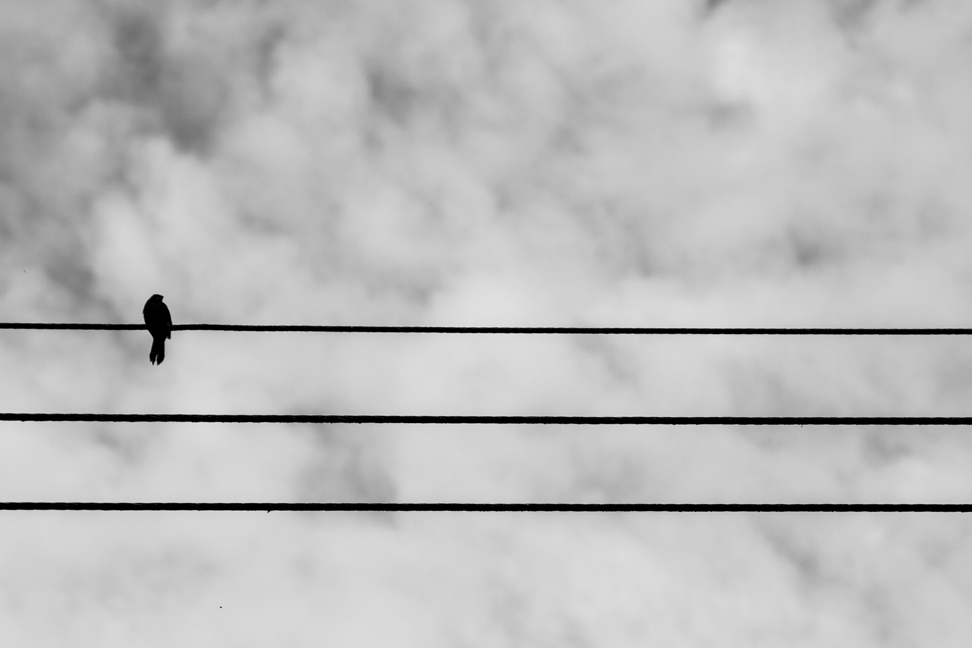 Bird on a Wire | fractalthoughts